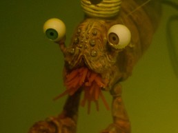 The Great Shrimpini Close Up by Andy Monks / Trick Monkey ahnd Sam McHardy
